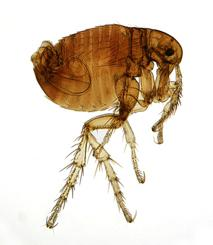 There are certain conditions in your home that can attract fleas, termites and carpenter ants to your home....