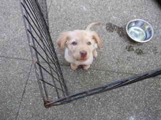 Adoption Event Success!! - Image 2