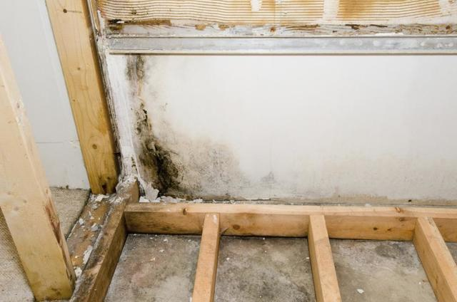 Wall with mold growth.