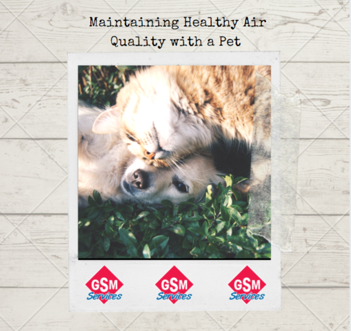 Maintaining Healthy Air Quality with a Pet
