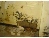 Quick cleanup following a flood is the most important step you can take to prevent long term mold issues....