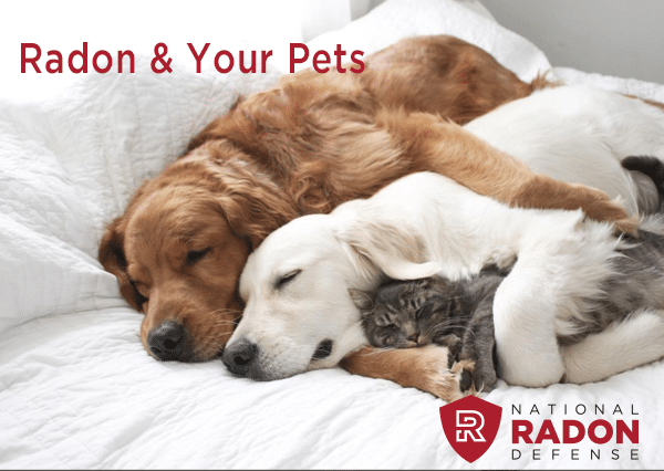Radon affects everyone in your home.  This includes your fur babies. Learn how to it affects them and how...