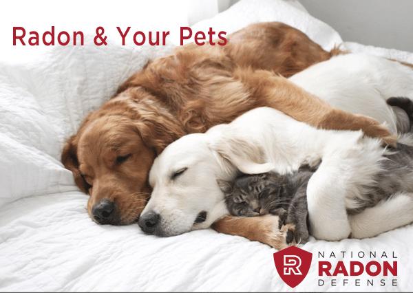 radon and pets