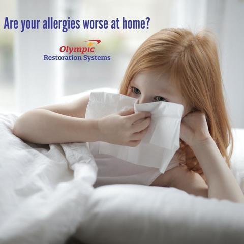 Why Are My Allergies Worse At Home?