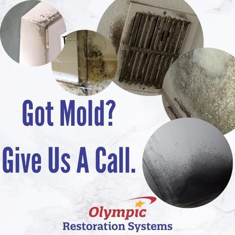 Leave Mold Remediation to the Experts