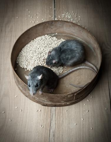 Preventing Rodents with the Crawl Space Encapsulation System