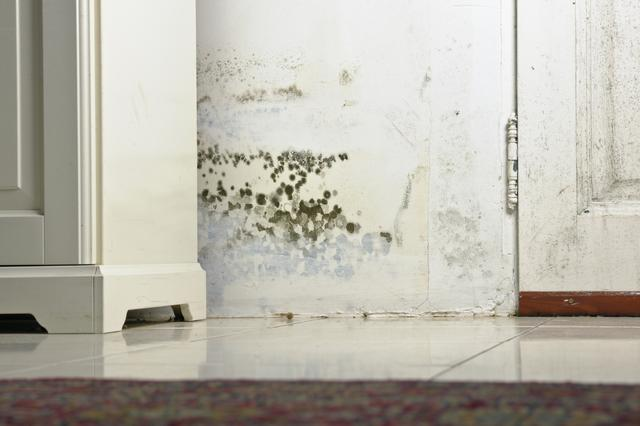 The Truth About Mold