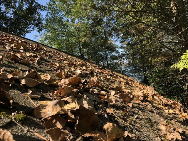 Your Roof vs. Leaves