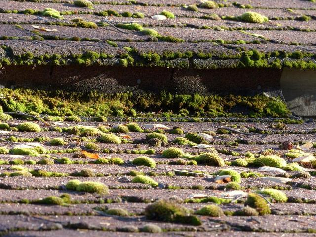 Your Roof vs. Moss