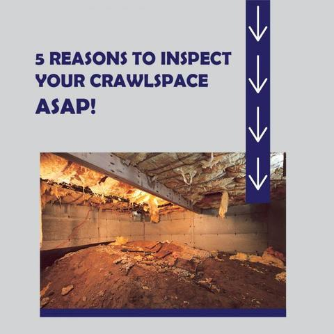 5 Reasons You Need Your Crawlspace Inspected ASAP - Image 1