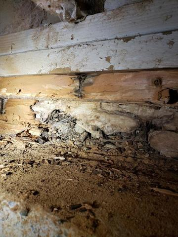 What to do when you see wood damage in your crawlspace