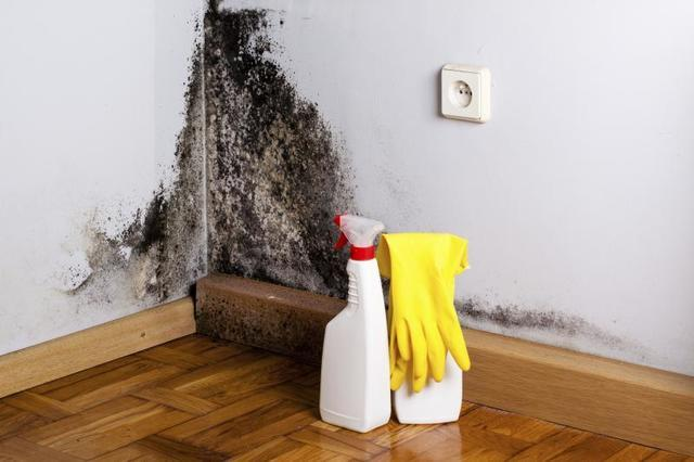 Inspecting Your House for Mold