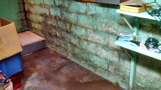 This basement wall is OBVIOUSLY wet.