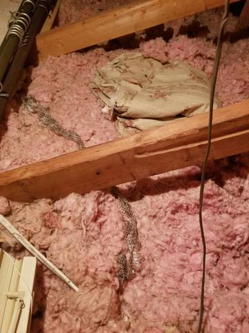 Snake Skin Found in Hendersonville, NC Attic!