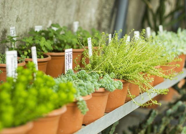 Shop Plant Sales this Mother's Day Weekend