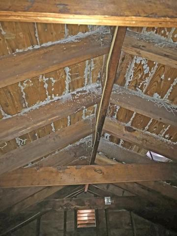 Preventing And Treating An Attic Mold Problem In Nj News And Events For Mold Solutions By Cowleys