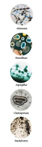 Learn about the different types of mold commonly found in homes in New Jersey....