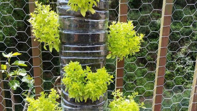 5 Ways to Spruce Up Your Backyard - Image 2