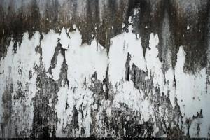 Black Mold Dangers Due To Ice Dams On Boston Homes