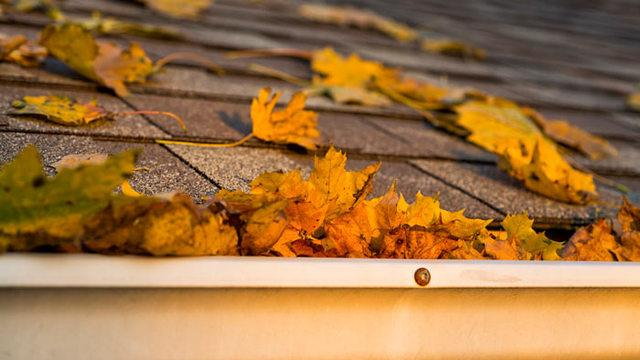 3 Ways Fallen Leaves Can Damage Your Roof