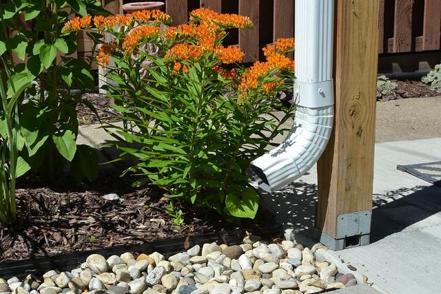 How to Build a Rain Garden in 5 Steps