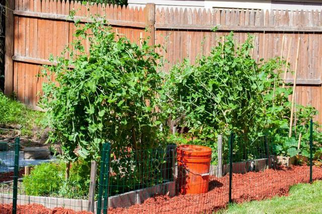 Planning a Garden Checklist