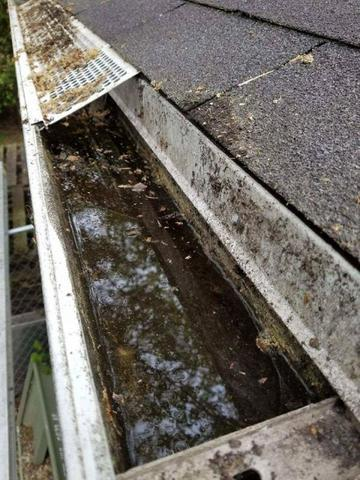 This Is What You Need to Know About Clogged Gutters