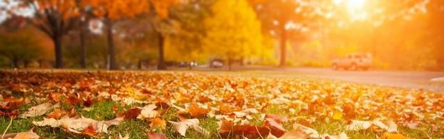 At Leafguard we are confident that we know how to keep leaves, debris and water from causes potential problems to...