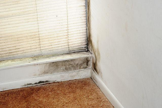 Mold is a nasty problem that can be difficult to get rid of, looks unsightly, and can be very hazardous...