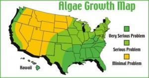 Black Roof Stains? Check for Algae! - Image 4