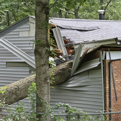Tree Landing on House.
