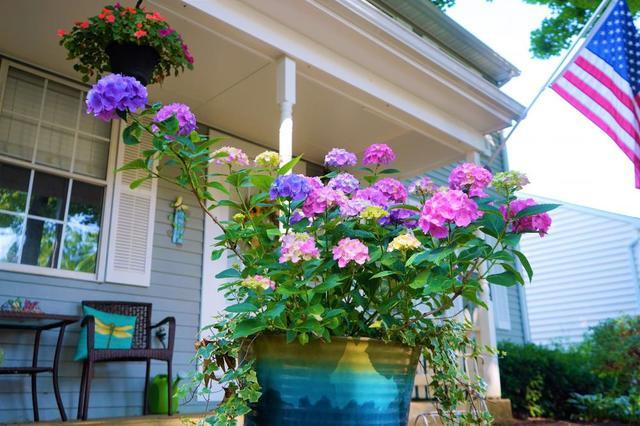 Container Gardening 101 - Image 2