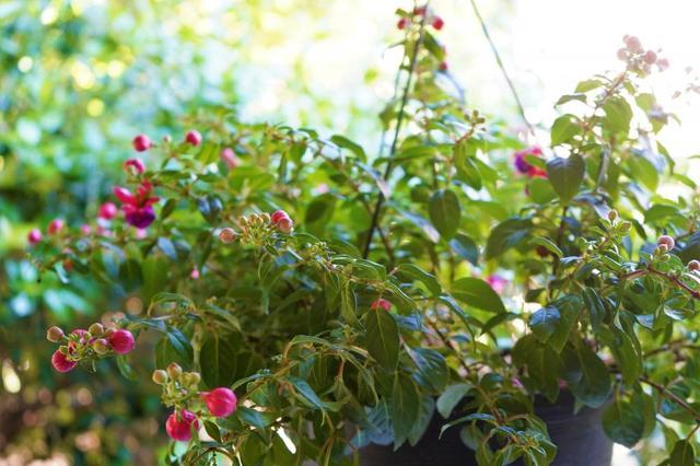 Container Gardening 101 - Image 3