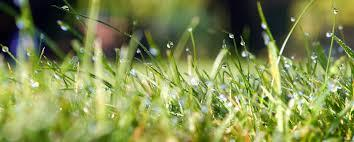 The 411 on H2O - How to water your lawn correctly. - Image 3