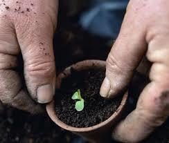 The New Dirt Deal - Making Your Own Potting Soil. - Image 5