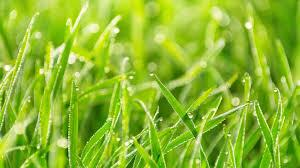 The 411 on H2O - How to water your lawn correctly. - Image 2