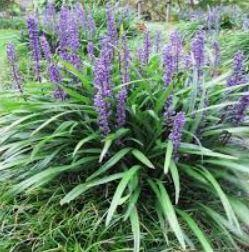 Teh Power Of Perennials: Our Top Picks. - Image 9