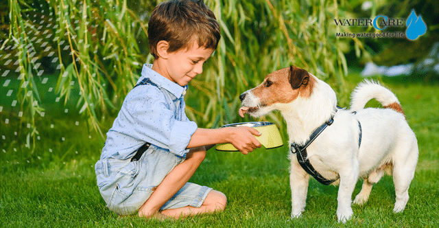 Small boys giving water to a dog