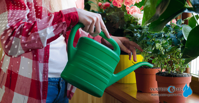 Woman watering houseplants