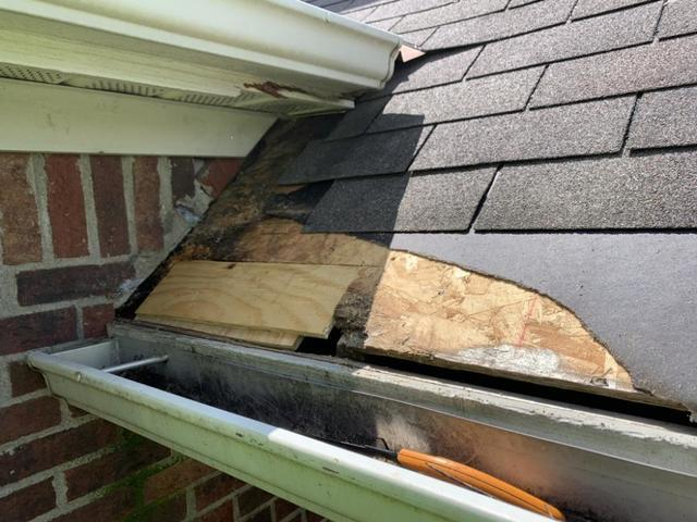 Protect Your Roof From Animals and Critters