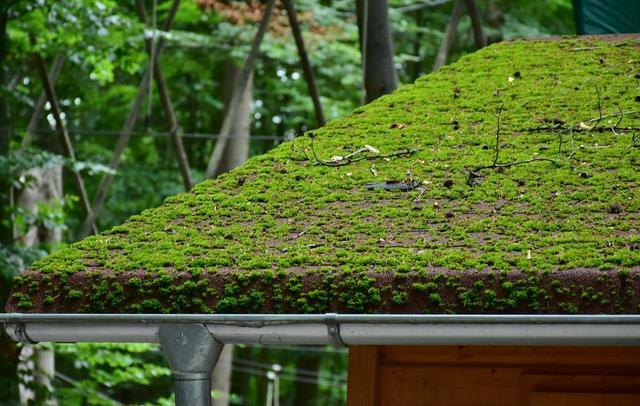 How Often Do You Think About Your Roof?