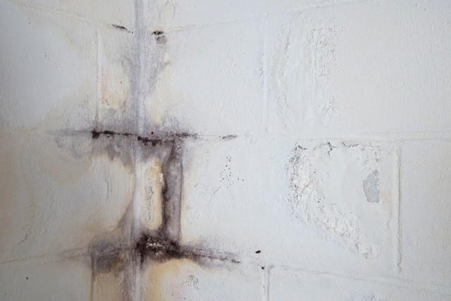 Mold on a block wall