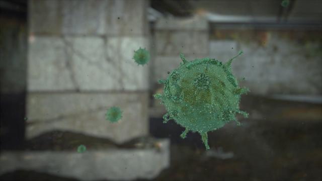 A mold spore