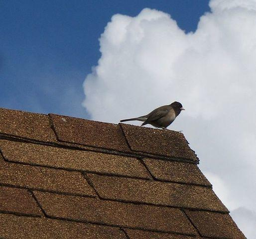 What You Can Do to Maintain Your Roof's Health