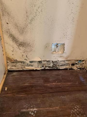 Mold Remediation Buford, GA