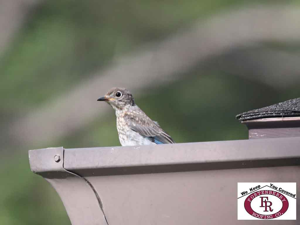 How to Keep Birds out of Your Gutters - Image 1