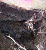 Foundation Cracks in Old Bridge