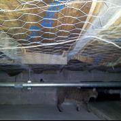 Damp, Moldy Crawlspace in Charleston, MS