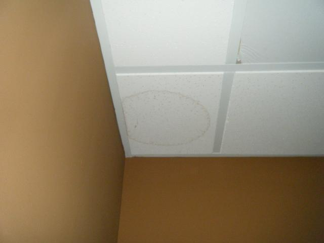 Mold Remediation Due to Leaking Basement in Shepherdsville, KY