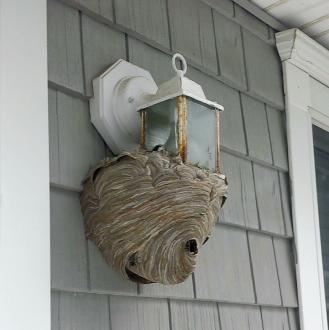 Hornets nest in Fair Haven, NJ